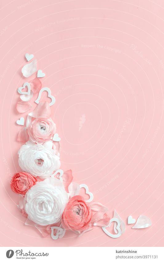 Winkelrahmen aus Ranunkelblüten und Herzen auf einem hellrosa Hintergrund Blume Valentinsgruß Rahmen rot Rosen Geschenk Draufsicht Pastell Monochrom