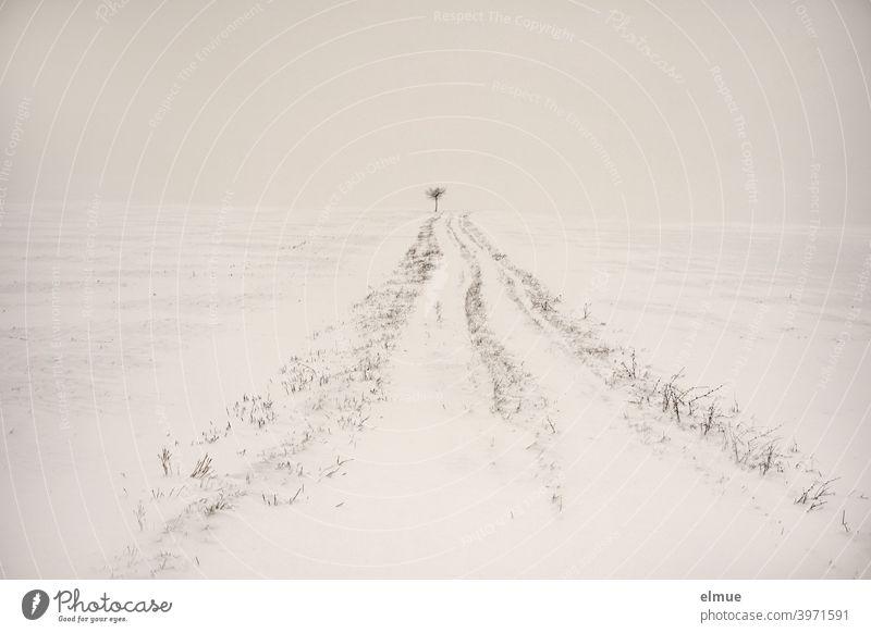 Der Weg ist das Ziel!  *1000* / Verschneiter Feldweg mit einem kleinen Baum am Horizont Schnee Winter weiß minimalistisch Ackerbau Landwirtschaft dörflich
