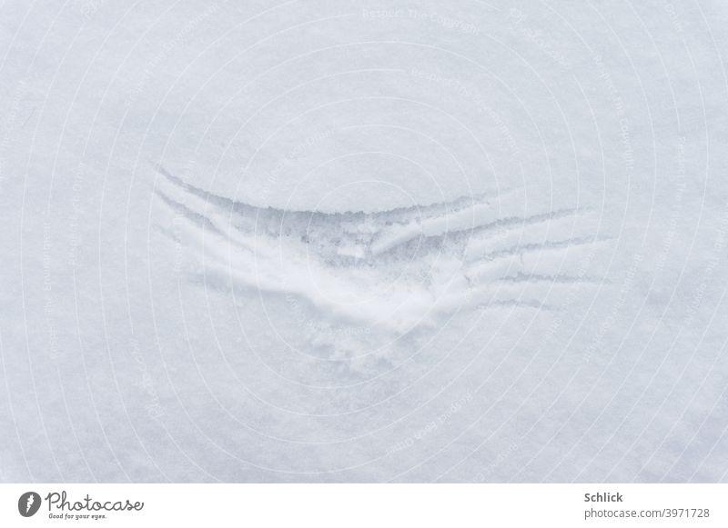 Die Flügel einer Amsel haben Spuren im Pulverschnee hinterlassen Schnee Vogel Schneedecke Winter Überlebenskampf hell weiß Außenaufnahme Menschenleer Frost Tag