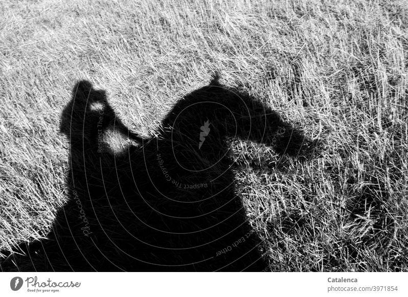 Reiten auf Schattenfell Reiterin Pferd Natur Gras Tier Nutztier Person Wiese Grasland Pflanze reiten Steppe Zügel Tag Tageslicht