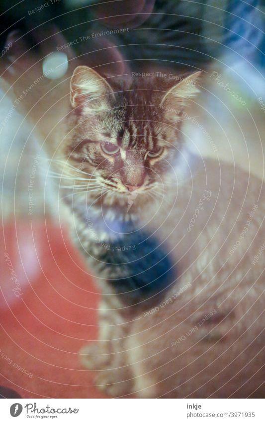 Mein Kater sitzt draußen vor der Verandatür II Farbfoto Außenaufnahme Menschenleer Tierportrait Katze Haustier Zahm Hauskatze Tierporträt kuschlig niedlich
