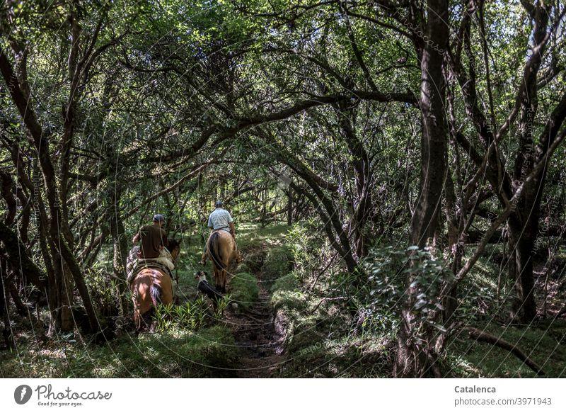 Zwei Reiter und Hund bahnen sich ihren Weg durch den dichten, schattigen Urwald Natur Flora Fauna Pflanze Bäume Gestrüpp Tiere Nutztiere Pferde reiten Pfad