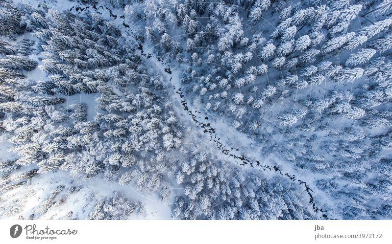 Vogelperspektive auf einen winterlichen Bergbach II Diagonal DJI Drohne Bach Gewässer Winter kalt eiskalt Baumwipfel Baumkrone Tannenspitze von oben Natur