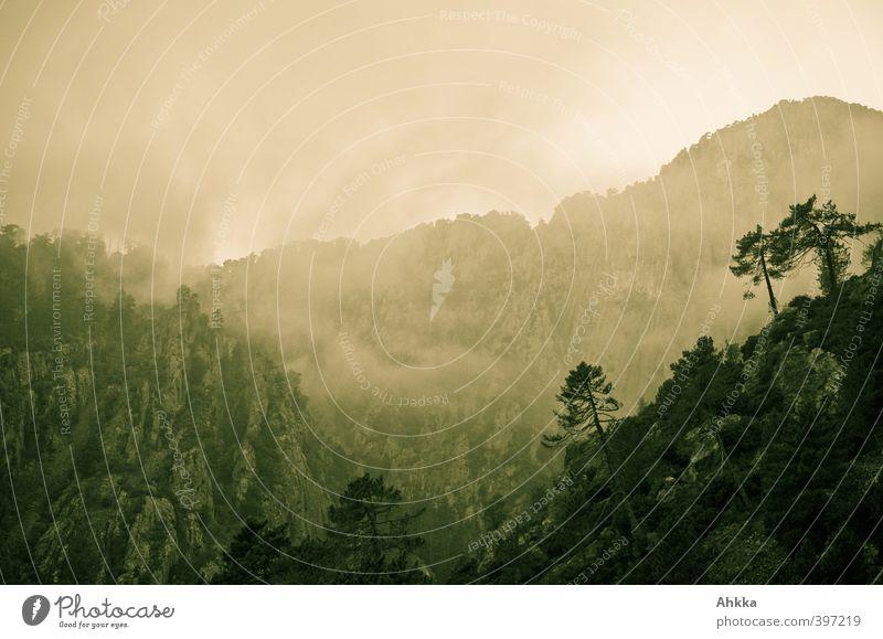 Exotik Himmel Natur Ferien & Urlaub & Reisen Blume Einsamkeit Landschaft Wolken Ferne Berge u. Gebirge Freiheit Stimmung Felsen Horizont Nebel Idylle Sträucher