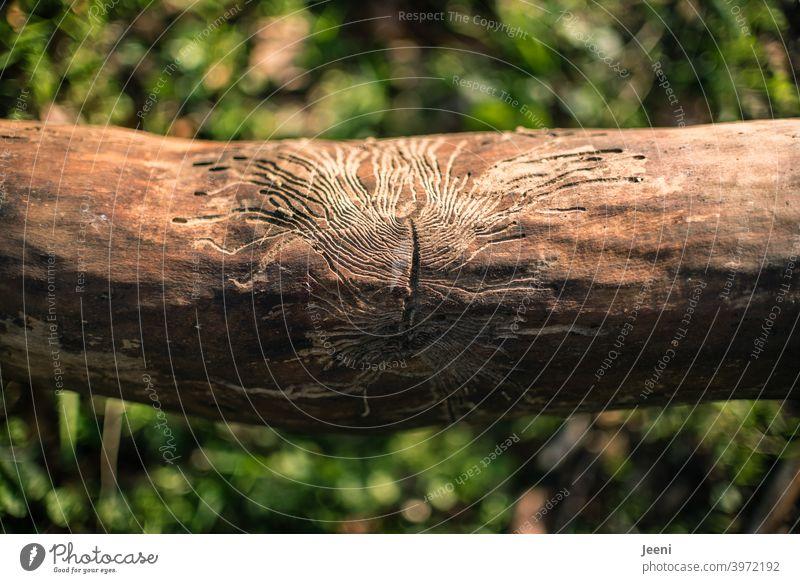 Ein Kunstwerk der Natur | Feine Struktur von Fraßgängen in einem abgestorbenen Baumstamm | abgestorben Strukturen & Formen struktur Fressgänge Fraßspur