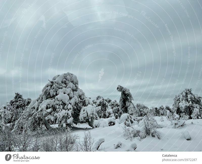 Bäume tragen schwerere Schneelasten an diesem Januarmorgen Jahreszeit Pflanze Natur Landschaft Baum Tageslicht Kälte Winter Witterung Wetter biegen brechen