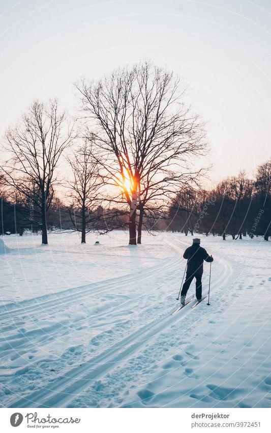 Ski-Langlauf in Berlin im Britzer Garten Naturerlebnis Ferien & Urlaub & Reisen Lebensfreude Landschaft Tourismus Licht Kontrast Schatten Sonnenstrahlen