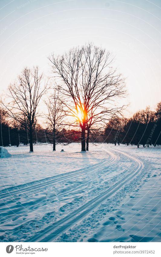 Ski-Loipe in Berlin im Britzer Garten Naturerlebnis Ferien & Urlaub & Reisen Lebensfreude Landschaft Tourismus Licht Kontrast Schatten Sonnenstrahlen