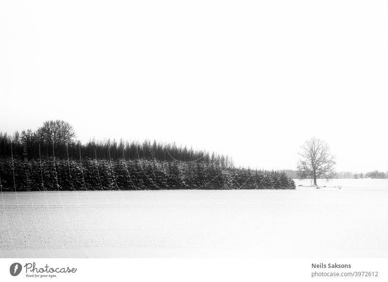 Winterwald Minimalismus abstrakt erstaunlich Hintergrund schön Schönheit schwarz hell Postkarte Kontrast Textfreiraum Tag Umwelt Märchen fantastisch Wald Frost