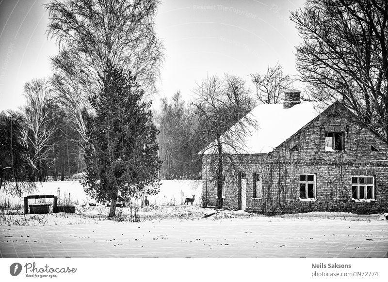 nicht ganz verlassene Immobilie mit schönem altem Backsteinhaus, altem Brunnen und zwei niedlichen Bewohnern / zwei Rehe auf linkem Grundstückshof auf Futtersuche im Januar in Lettland / Platz für ein neues Leben