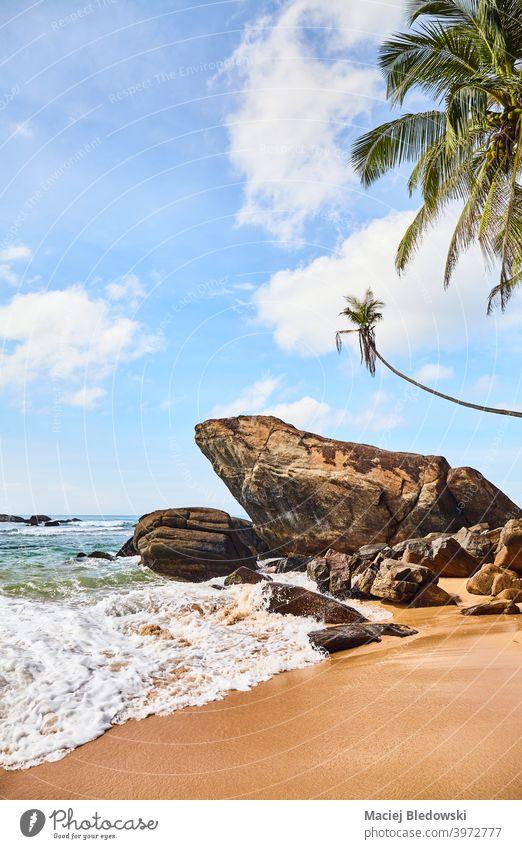 Tropischer Strand mit Felsen und Kokosnusspalmen an einem sonnigen Sommertag. Handfläche Natur tropisch Paradies friedlich Wasser schön MEER Insel exotisch