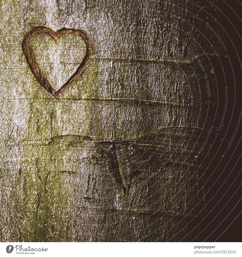 Herz in einen Baum geritzt herzförmig Rinde Liebe Zeichen Farbfoto Verliebtheit Romantik Gefühle Menschenleer Nahaufnahme Valentinstag Außenaufnahme