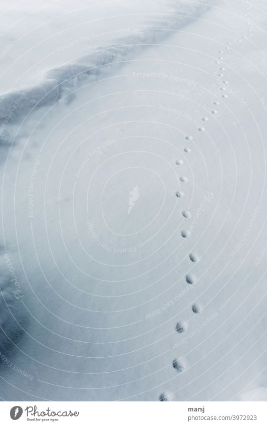 Wenn auch Katzen nicht mehr den direktesten Weg nehmen. Schnee Tierspur Katzenspuren wellenförmig Winter weiß kalt Spuren Wege & Pfade Pfotenabdrücke Schneespur