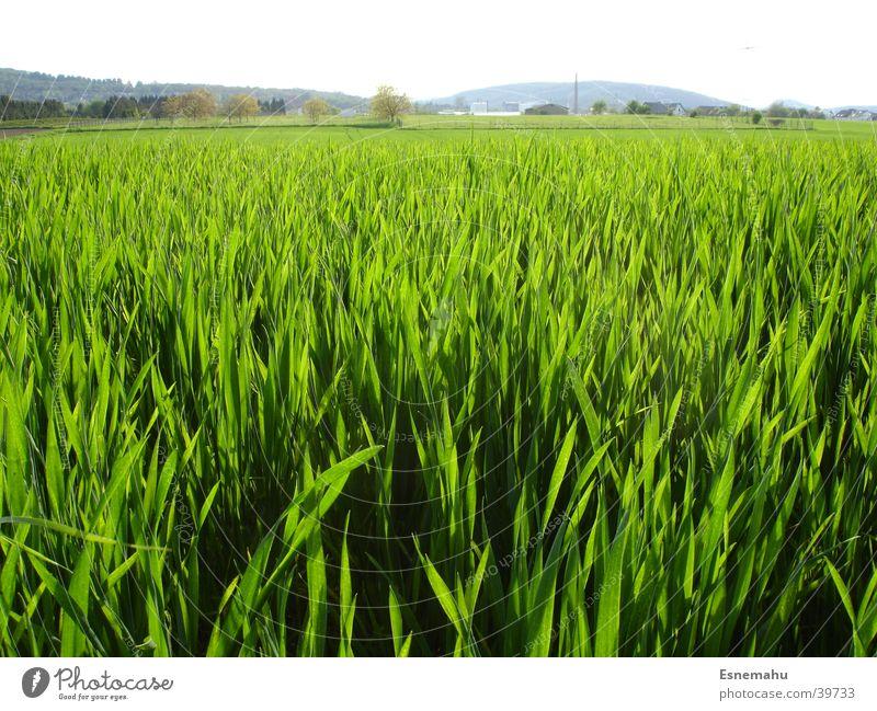 Grasblick Wiese grün Ferne nah Halm schwarz Sommer Frühling Strukturen & Formen Feld Rasen Himmel Natur Wind wehen blau Wege & Pfade Blick Landschaft