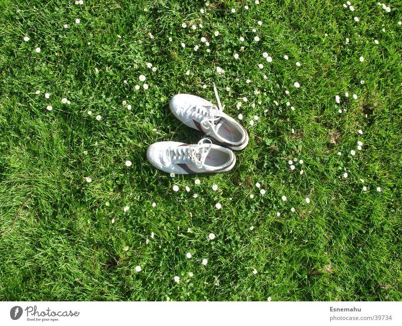 Schuhe ohne Mensch Turnschuh Gras Blume Gänseblümchen Wiese Feld Vogel Vogelperspektive fehlen Einsamkeit grün grau weiß gelb Schnur Bekleidung Freizeit & Hobby