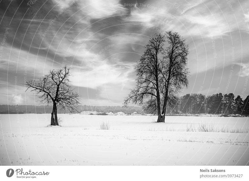 Baumfamilie im Winterschlaf unter dramatisch bewölktem Himmel Wintersonnenwende Winterlandschaft abstrakt allein schön Schönheit Wolken wolkig kalt