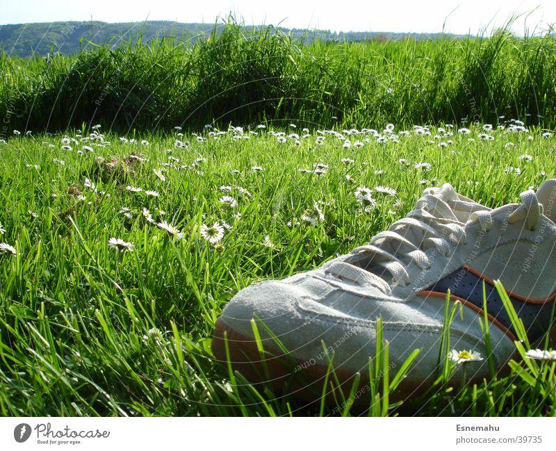 Schuhige Landschaft Mensch Himmel Natur blau weiß grün Baum Blume Einsamkeit Ferne gelb Wiese Berge u. Gebirge Gras grau Vogel