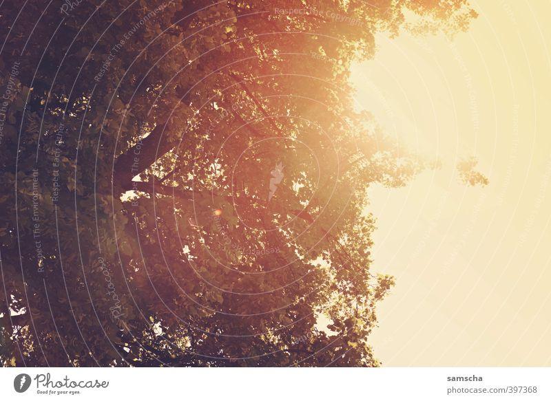 sommerlich Natur Ferien & Urlaub & Reisen Sommer Sonne Baum Freude Umwelt Freiheit hell genießen Lebensfreude Schönes Wetter Sonnenbad heiß Sommerurlaub