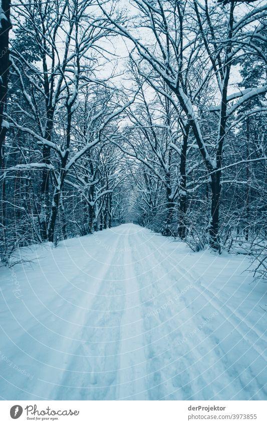 Winter am Wannsee: Weg zum Wannseebad Winterstimmung Winterurlaub ästhetisch Schnee außergewöhnlich Textfreiraum Mitte Sonnenlicht Textfreiraum unten