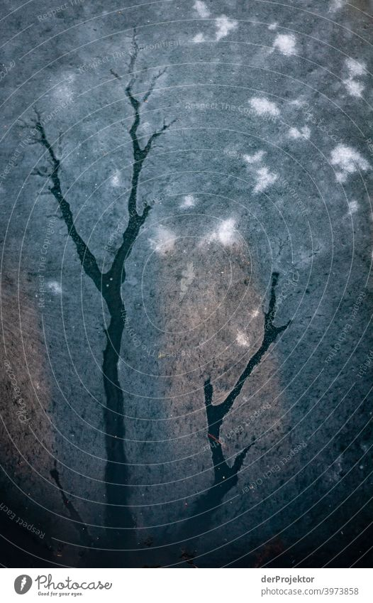 Riss in Eisfläche im See in Berlin V Winterstimmung Winterurlaub ästhetisch Schnee außergewöhnlich Textfreiraum Mitte Sonnenlicht Textfreiraum unten