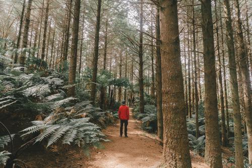 #AS# Wo ist T-rex? jungel Wald Farn Farnblatt Natur grün Pflanze Farbfoto Blatt Umwelt Wildpflanze Nahaufnahme Außenaufnahme Bäume rot abenteuer Abenteurer