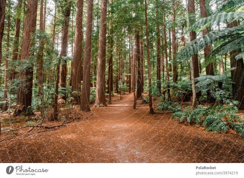 #AS# Rote Bäume Neuseeland Wildnis Mammutbaum Redwoods NP verzeiflung verlaufen Dinosaurier verlassen allein wandern Abenteurer abenteuer rot Wildpflanze