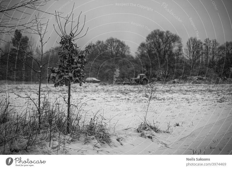 kleine Eiche mit trockenen Blättern in trüben Wintertag / und alten Vintage-Traktor im Hintergrund abstrakt erstaunlich schön Schönheit schwarz hell Kontrast