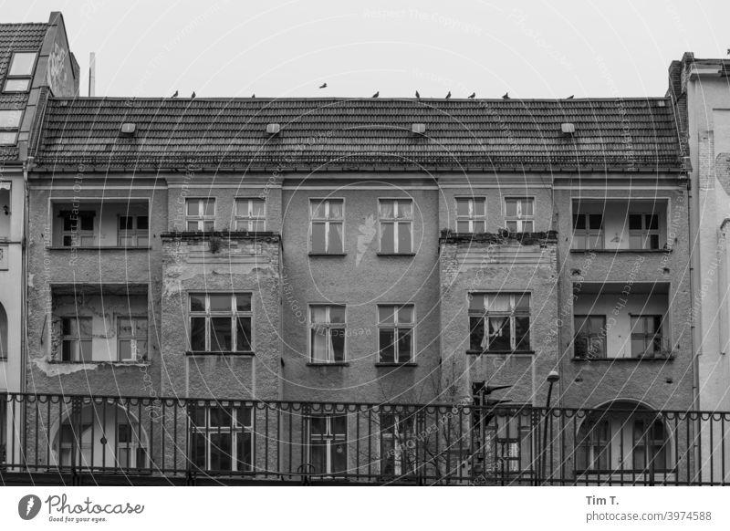 Altbau Schönhauser Allee Prenzlauer Berg Berlin s/w Hauptstadt Menschenleer Altstadt Stadtzentrum Außenaufnahme Haus Tag Architektur Schwarzweißfoto