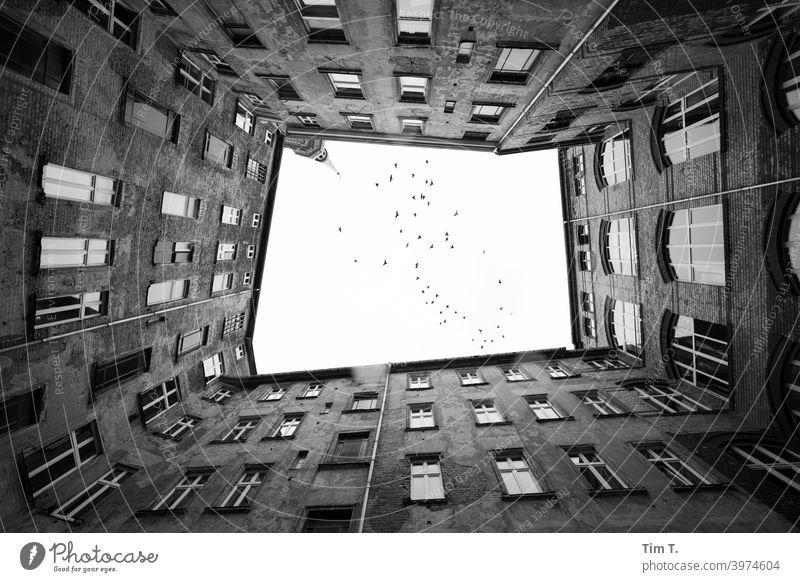 Hinterhofvögel Berlin Prenzlauer Berg Hof Menschenleer Stadt Stadtzentrum Tag Haus Hauptstadt Altstadt Außenaufnahme Fenster Altbau Bauwerk Gebäude Fassade