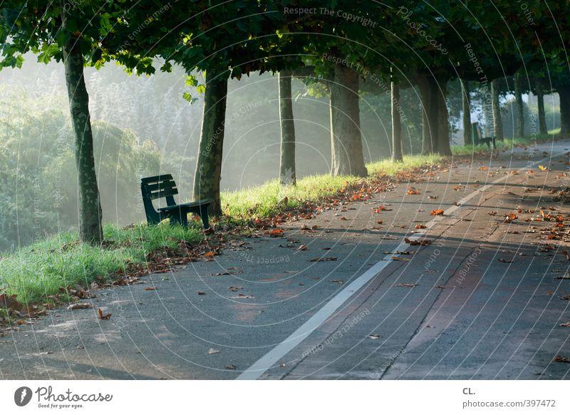 herbstlich Ausflug Umwelt Natur Landschaft Sonne Sonnenlicht Herbst Schönes Wetter Baum Blatt Park natürlich ruhig Idylle Wege & Pfade Bank Herbstlaub