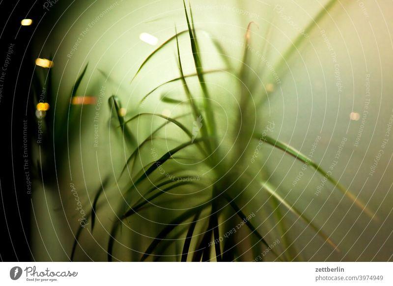 Topfpflanze hinter Milchglas ast baum menschenleer natur rasen stamm strauch textfreiraum tiefenschärfe topfpflanze zimmerpflanze büro scheibe milchglas