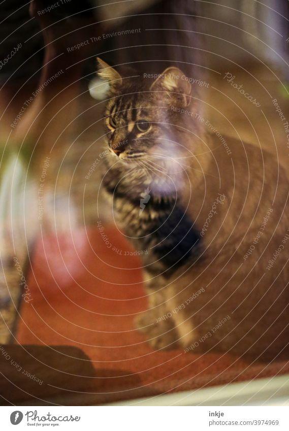 Mein Kater sitzt draußen vor der Verandatür Farbfoto Außenaufnahme Menschenleer Tierportrait Katze Haustier Zahm Hauskatze Tierporträt kuschlig niedlich