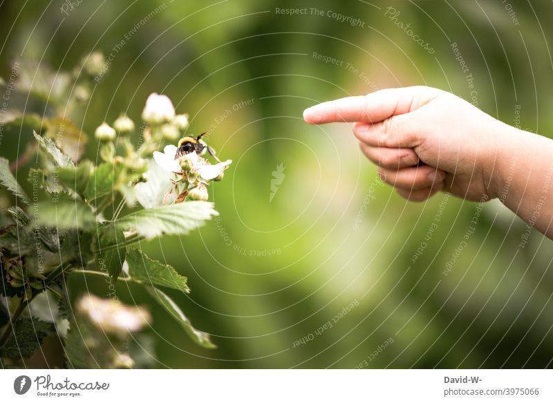 Kind erkundet dir Natur erkunden Insekten Hummel Zeigefinger Pflanzen Frühling Hand neugierig Freude Kindheit Sommer Garten