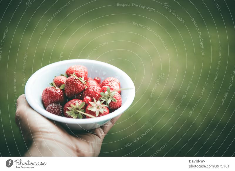 frische Erdbeeren in einer Schale Obst Hand Sommer lecker gesund saftig rot Frucht Gesunde Ernährung fruchtig