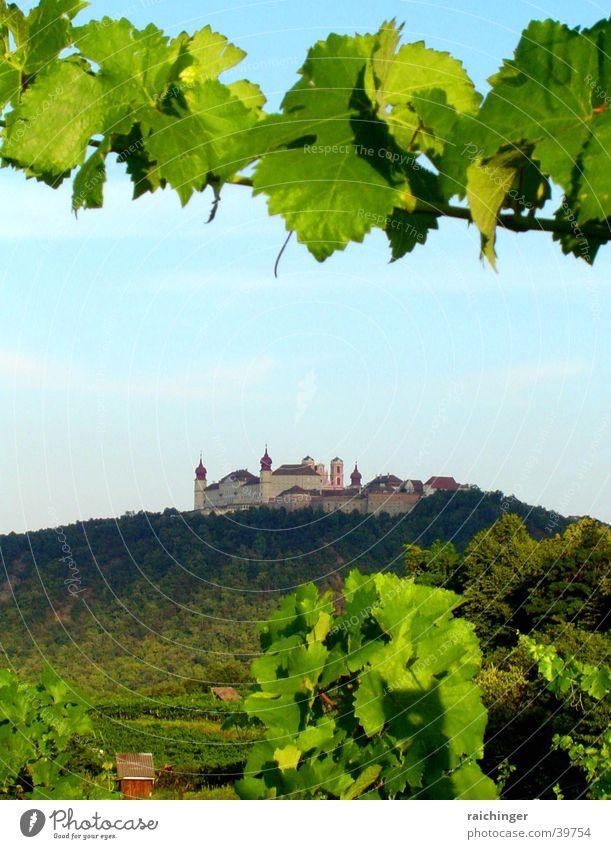 stift göttweig Berge u. Gebirge Landschaft Wein Hügel historisch Frucht Weintrauben Kloster Geistlicher Weinbau Bundesland Niederösterreich Benediktiner
