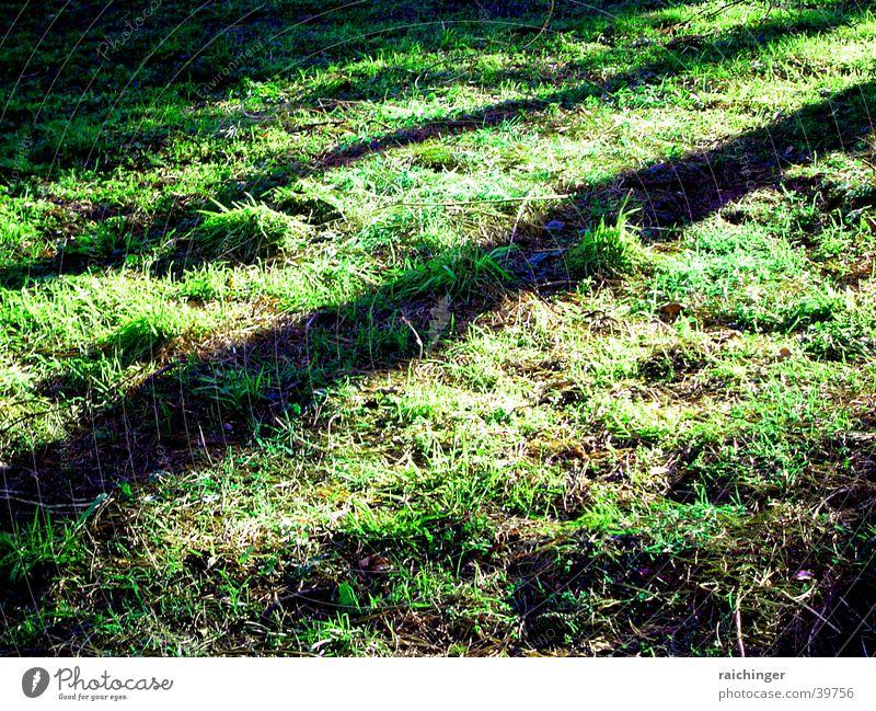 Waldboden grün Gras Frühling Erde Bodenbelag Schatten schräger Lichteinfall Dialonale Leben
