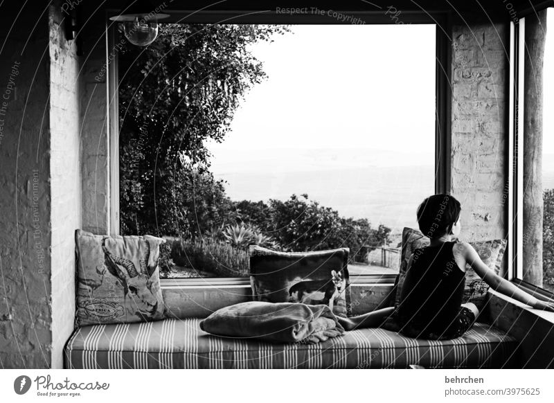 lieblingsplatz Porträt Sonnenlicht Kontrast Licht Häusliches Leben Innenaufnahme Abend gemütlich Kissen Baum Fenster Veranda Sofa Fernweh Südafrika Erholung