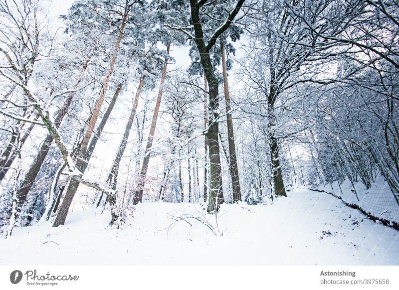 Winterwald Wald Schnee Bäume Weitwinkel Wetter Schneefall Nadelbaum Weg Pfad Landschaft Natur weiß Baumstamm Stämme hoch groß Ast Äste Außenaufnahme kalt