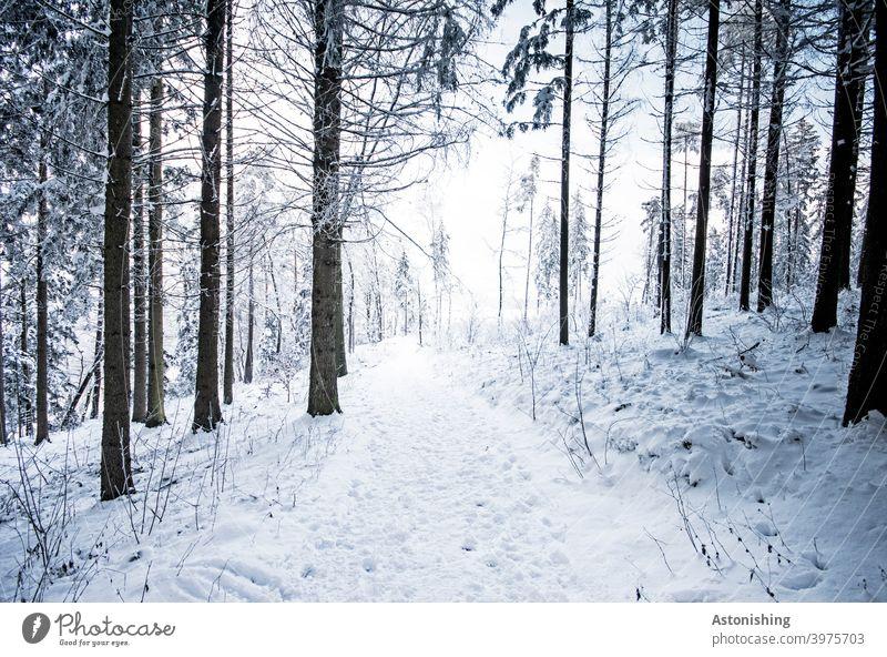 Weg durch den Winterwald Schnee weiß Bäume Wald Baum Baumstamm Rinde Spuren Pfad Jahreszeit Mischwald Natur Landschaft Himmel Reise Wanderung Horizont