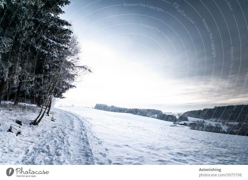 Winter-Hügel-Landschaft Winterlandschaft hügelig Wald Natur Himmel Horizont Schnee weiß Weg Pfad Licht Schatten Winterwald weißblau Sonne Wetter Jahreszeit