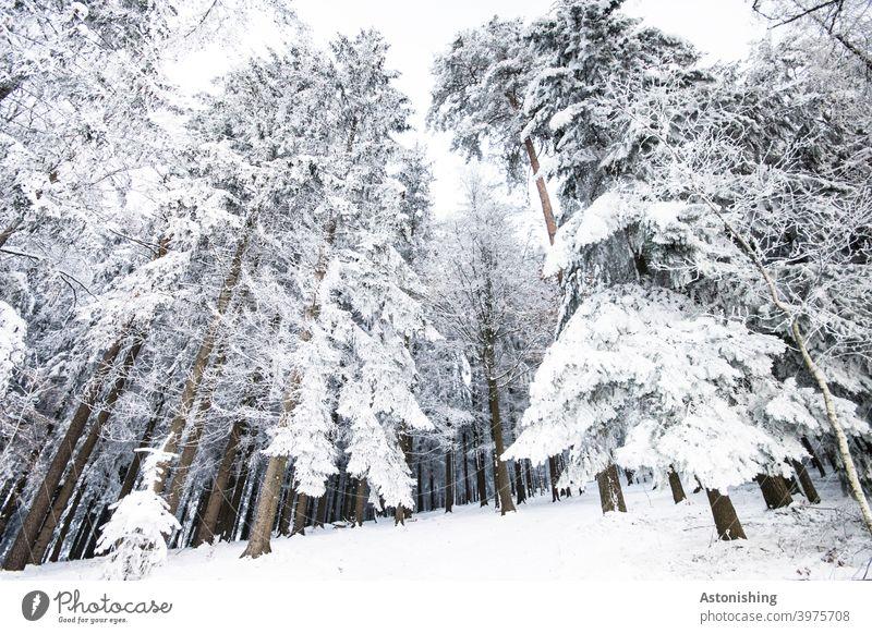Eingeschneiter Wald eingeschneit Winter Landschaft weiß Schnee Himmel Boden Winterwald Nadelbaum Wetter Baumstämme Bäume Winterlandschaft kalt Natur Wintertag