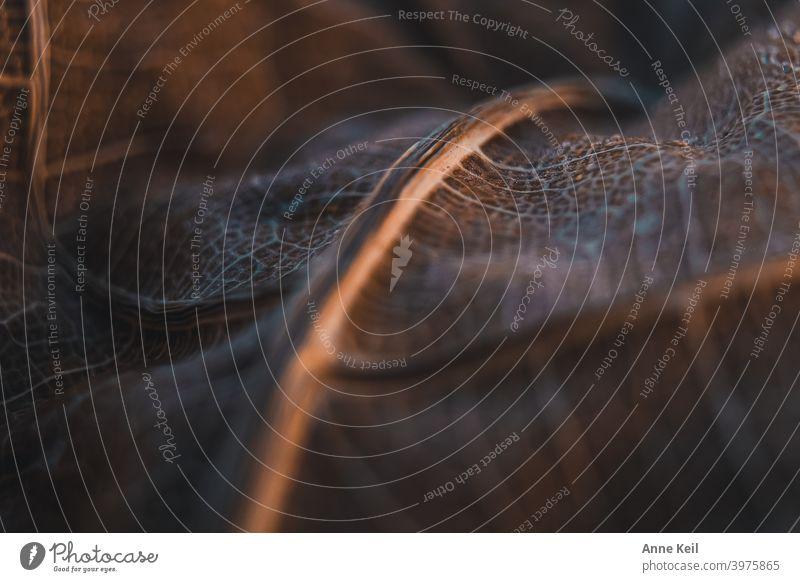 Makroaufnahme eines braunen Blattes mit kleinem Schärfepunkt. Natur Nahaufnahme Detailaufnahme Pflanze Farbfoto Schwache Tiefenschärfe natürlich Holz Maserung