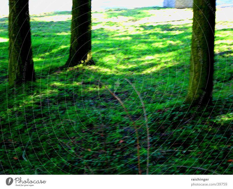 Naturteppich grün Gras saftig Baum Baumstamm verwurzelt Erde Unschärfe Licht Leben Bodenbelag Gen 1 10f Schatten impressionistisch