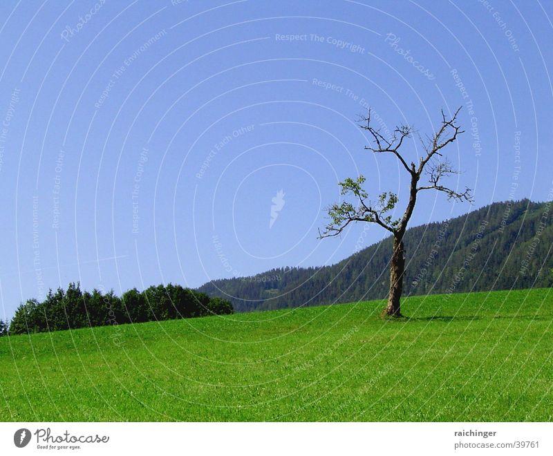 baum des lebens Natur Himmel Baum grün blau Einsamkeit Leben Wiese Landschaft dünn