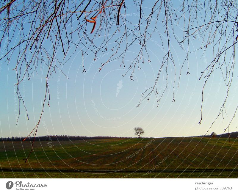 lonely tree Baum Einsamkeit Wiese Feld Zweig Himmel Ferne