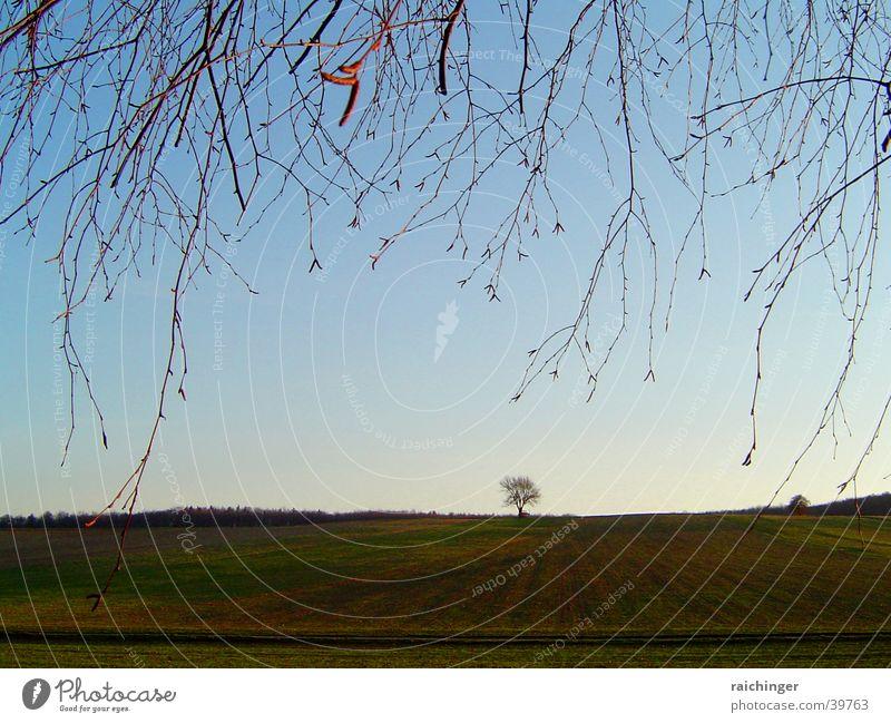 lonely tree Himmel Baum Einsamkeit Ferne Wiese Feld Zweig