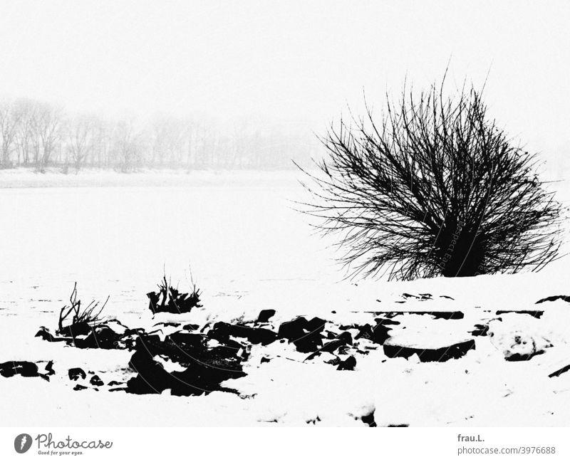 Es war einmal in Hamburg, da hatte es geschneit ... Winter Schnee kalt Frost Busch Elbe Baum Ufer Steine