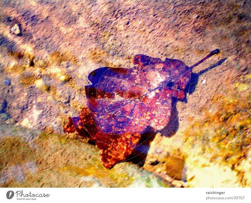 Unterwasserblatt Blatt Eichenblatt Bach Unterwasseraufnahme braun Wasser Fluss Reflexion & Spiegelung glänzend bequem Im Wasser treiben