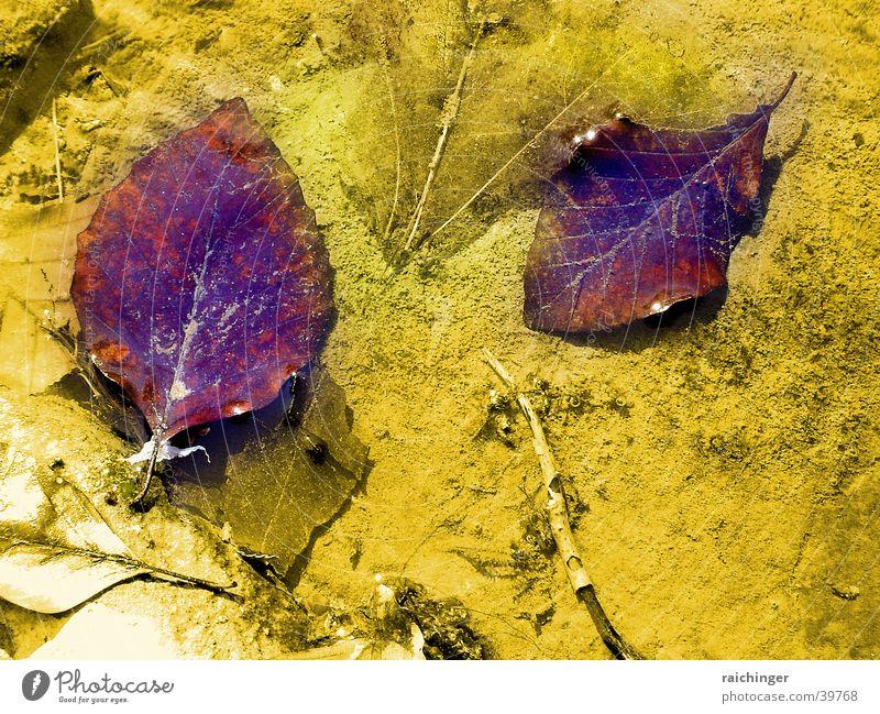 Blätter im Bach Wasser Blatt Sand Fluss schillernd