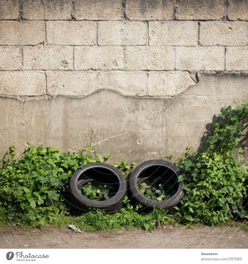ut köln | zollstock | zweisam. Grünpflanze Mauer Wand Fassade Straße Wege & Pfade Reifen Stein Beton Kunststoff Linie Bewegung fahren alt kaputt grau grün